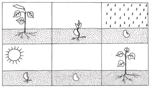 ciclo de vida de las plantas para niños de preescolar para colorear