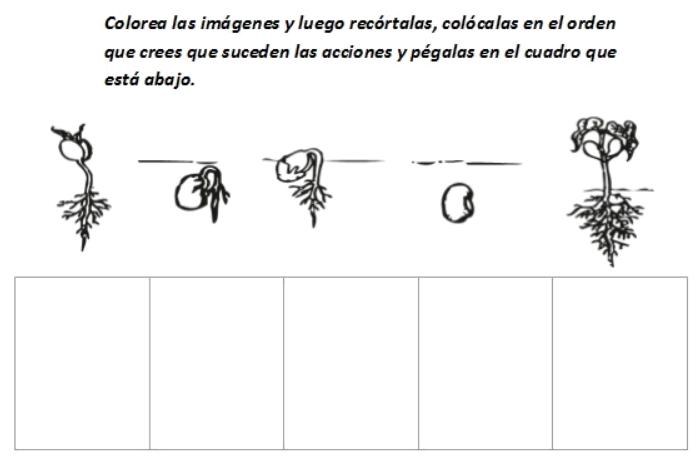 imagenes del ciclo de vida de las plantas para niños para colorear