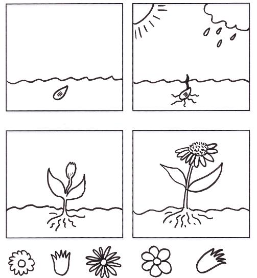 ciclo de vida de las plantas dibujos para colorear