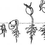 Ciclo de vida de las plantas para colorear