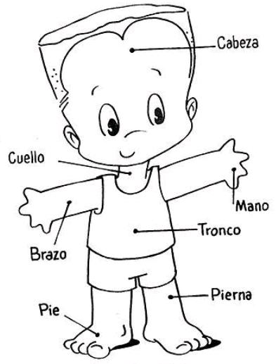 partes del cuerpo humano para niños para colorear