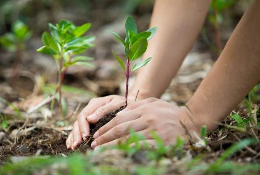 actividades para el cuidado del mdeio ambiente en la escuela